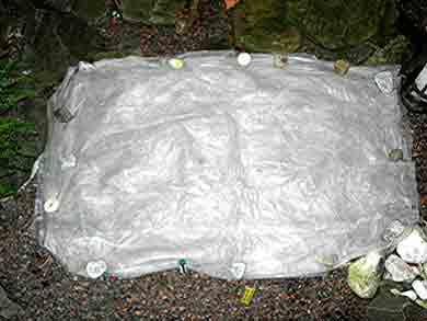 pflegetipps winter oder frostschutz f r orchideen im garten. Black Bedroom Furniture Sets. Home Design Ideas
